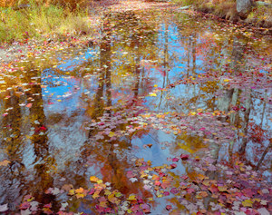 009 monet brook acadia national park maine.607.lightbox
