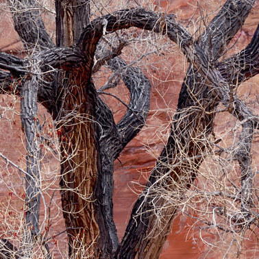 020 cottonwood escalante utah.594.detail