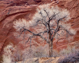 020 cottonwood escalante utah.594.lightbox