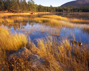 070 aunt bettys pond acadia national park maine.541.lightbox