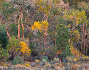 085 cottonwood stand garfield county utah.535.lightbox