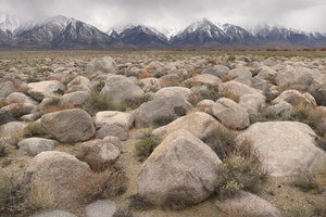 158 giants of the owens valley california.486.lightbox