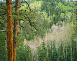 179 forest kaibab plateau arizona.621.lightbox
