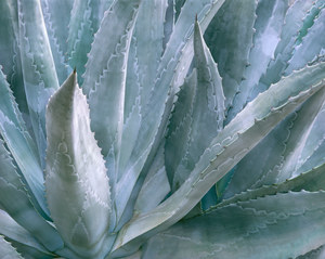 212 agave contra costa county california.636.lightbox