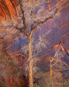 281 cottonwoods and desert varnish escalante utah.623.lightbox