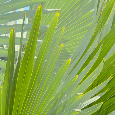 409 bismarck palm maui hawaii.423.detail