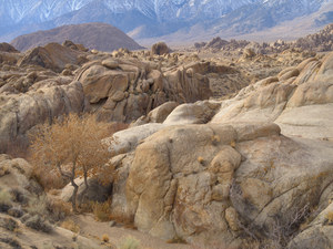 418 morning in the alabama hills owens valley california.425.lightbox