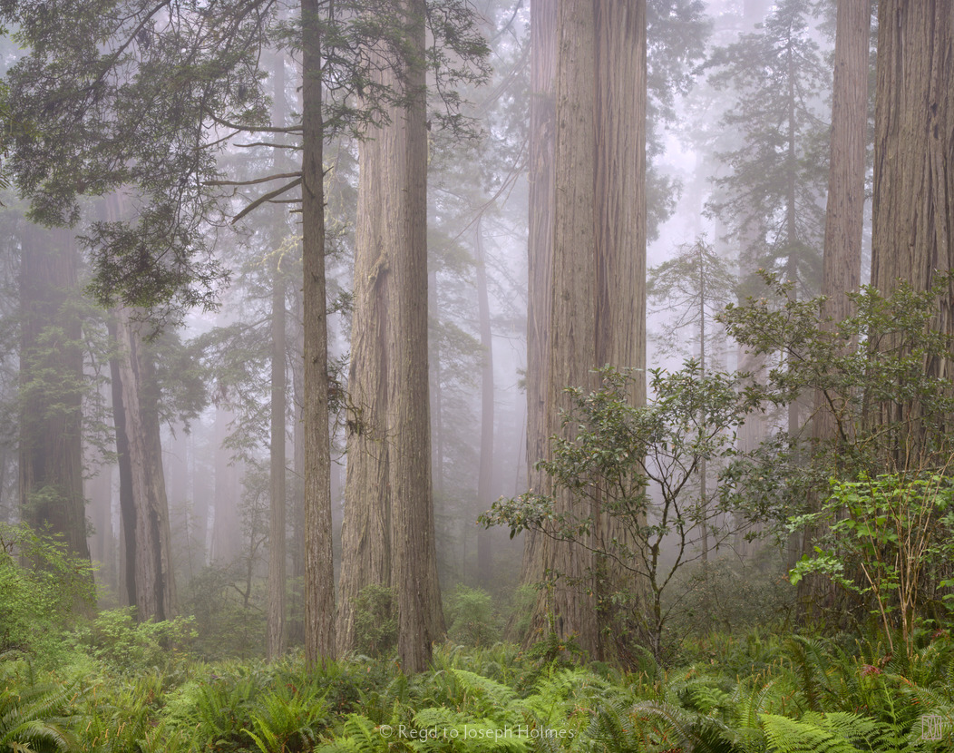 Great White Shark Attack Farallones Sf Co Ca Tail Or Fluke Whip Copy besides Redwoods In Fog Redwood National Park California Size X together with Img Med in addition Mv Bntu Njq N  M Bml Banbnxkftztcwm  Mje Mw V Sy Cr likewise . on fog