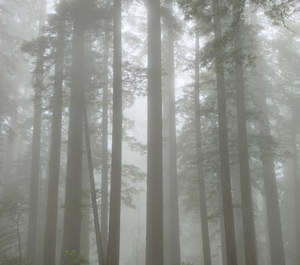 455 redwoods in fog 12 redwood national park california.695.lightbox