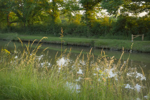 474 grasses at sunset canal du nivernais france.712.lightbox