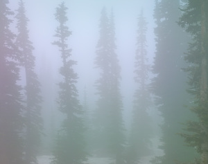 496 foggy trees mount rainier washington.734.lightbox